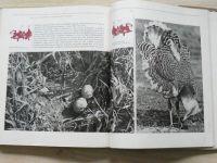 Teren - Po stopách vzácnej zveri (1980) slovensky