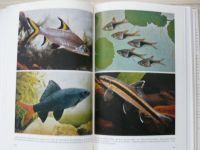 Sterba - Aquarienkunde 1 (1979) Band 1, německy, Akvaristika 1