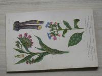Heilpflanzen Herbarium - 32 farbige Tafeln (1 tabule chybí, 31)