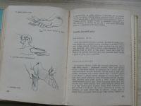 Bureš a kol. - Chov holubů (SZN 1965)
