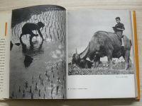 Csapó - V zemi zlaté želvy (1964) Cestopis z Vietnamu
