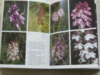 Procházka, Velíšek - Orchideje naší přírody (1983)