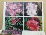 Dostálková - Rododendrony (1981)