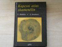 Habětín, Knobloch - Kapesní atlas zkamenělin (1990)