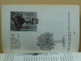 Hrdličkovi, Herynek - Bonsai - miniaturní strom v misce (1985)