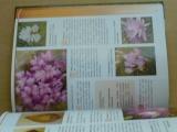 Křesadlová - Hlíznaté okrasné rostliny (2004)