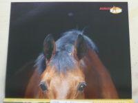 Jezdectví 1-12 (2011) ročník LIX. (chybí čísla 1-2, 7, 9, 11, 7 čísel)