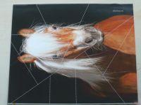 Jezdectví 5 (2012) ročník LX.