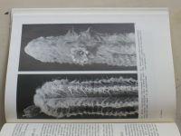 Kaktusy a iné sukulenty (1979) slovensky